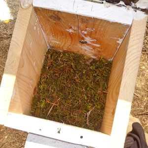 April 26: Deep base of moss