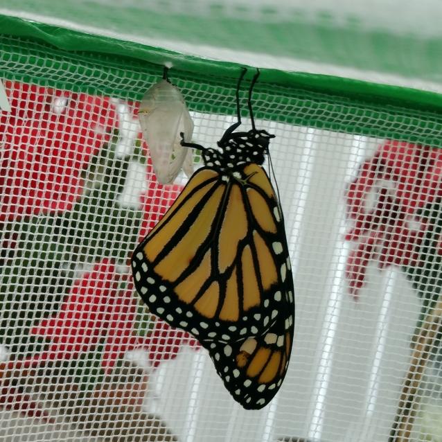 Monarch Cat6 eclosed