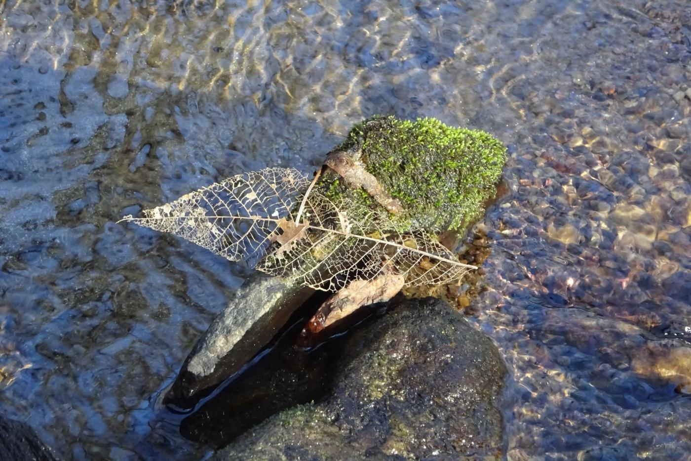 leaf lace stream1