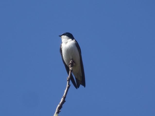 TRES perch2