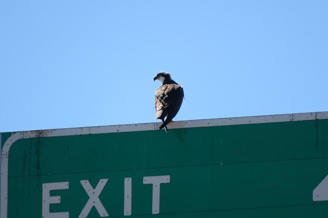 Osprey profile1