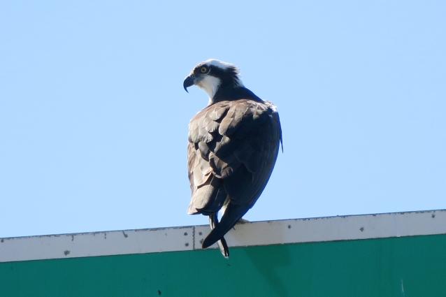 Osprey QACo