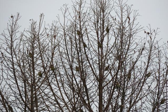 CEDW flock tree